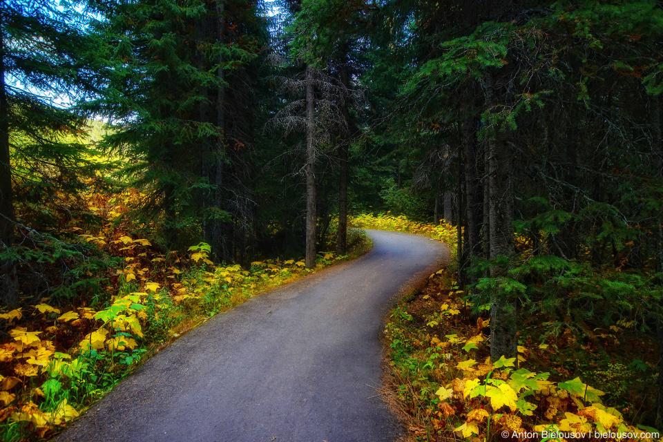 Sun Peaks trail