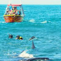 Снорклинг с китовой акулой на Юкатане (Мексика)