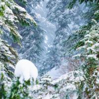 Заснеженный лес на вершине горы Grouse Mountain