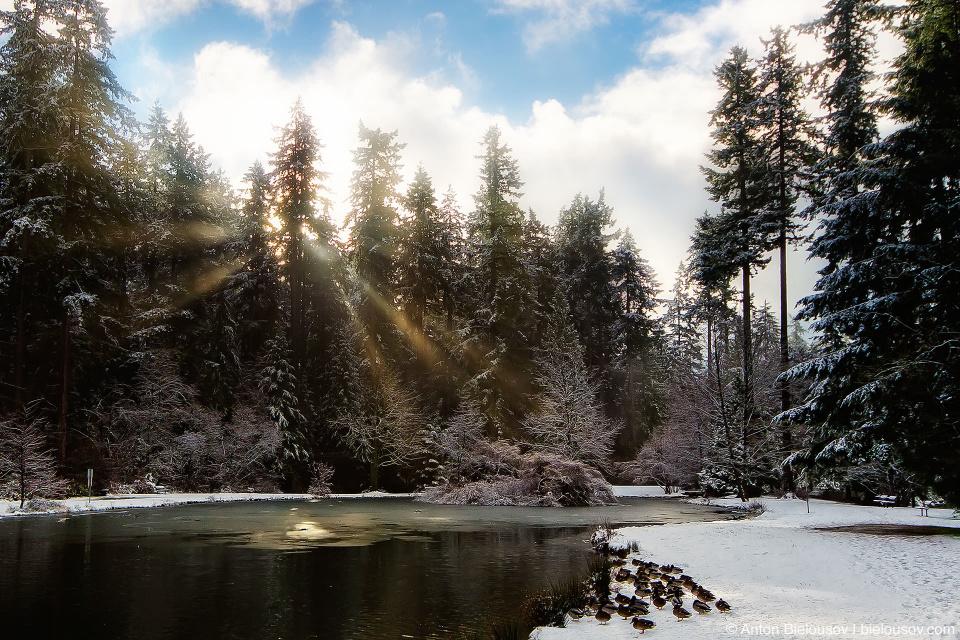 Первый снег в Ванкувере (Burnaby Central Park)