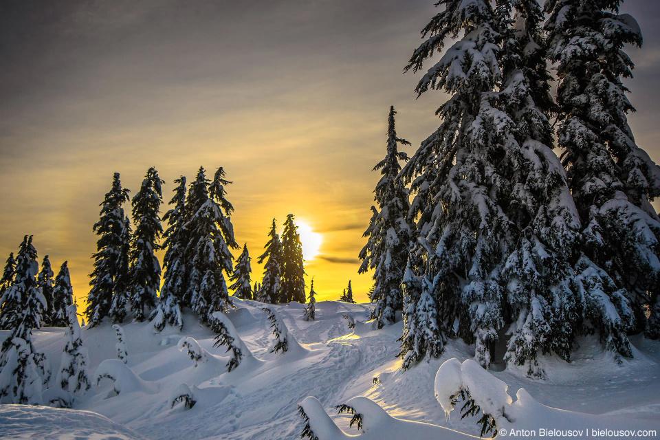 Заснеженный трейл для снегоступов на вершине горы Grouse Mountain в Ванкувере