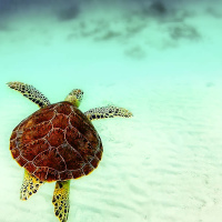 Коралловый риф Юкатана