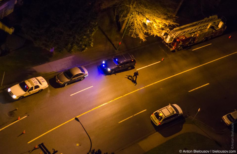 Police dog on crime scene