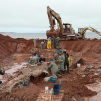 За 20 лет останки кит разложились, но вовсе не так хорошо как на то надеялись: плоть кита по-прежнему была на костях, только теперь все это плавало в разложениях и китовом масде. Запах стоял невыносимый на несколько километров, как, должно быть, знают жители Китсилано в Ванкувере, куда в 2010 годы привезли откопанные спустя 20 лет останки животного.