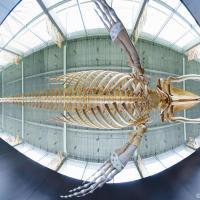 История одного кита