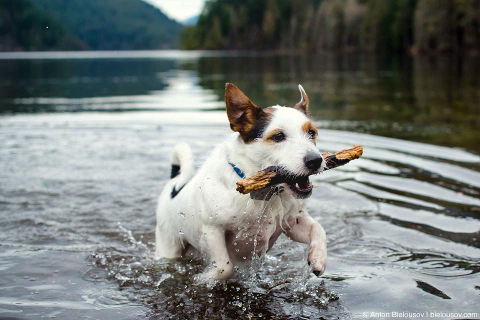 Dogs off-leash beach on Buntzen Lake