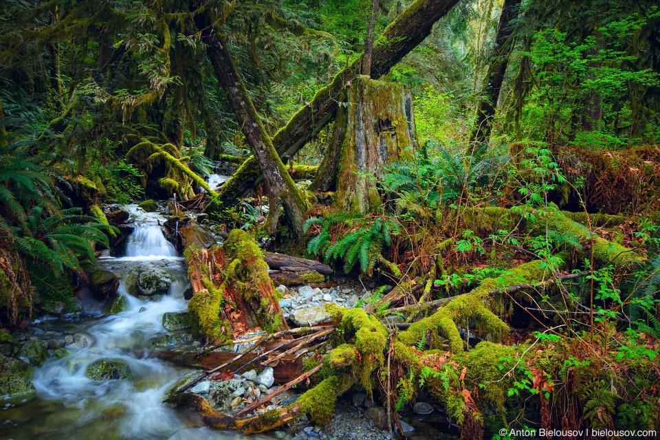 Mountain stream in rainforest from Eagle Mountain down to Buntzen Lake (Vancouver, BC)