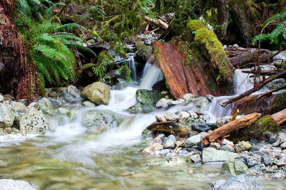 Ручьи на тропе вокруг озера Buntzen Lake