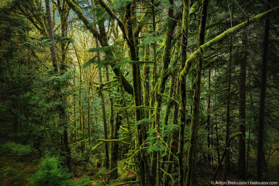 Moss vegetation in forest at Buntzen Lake trail