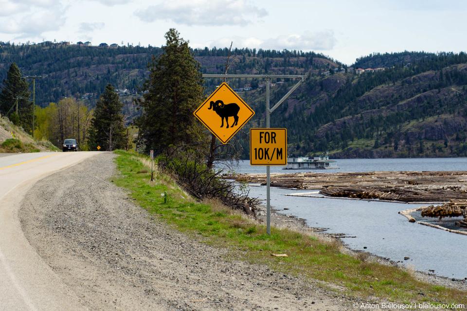 В Келоуне считают, что километры пишутся именно так:  теперь здесь бараны на 10 Кельвинов на морскую милю вокруг.