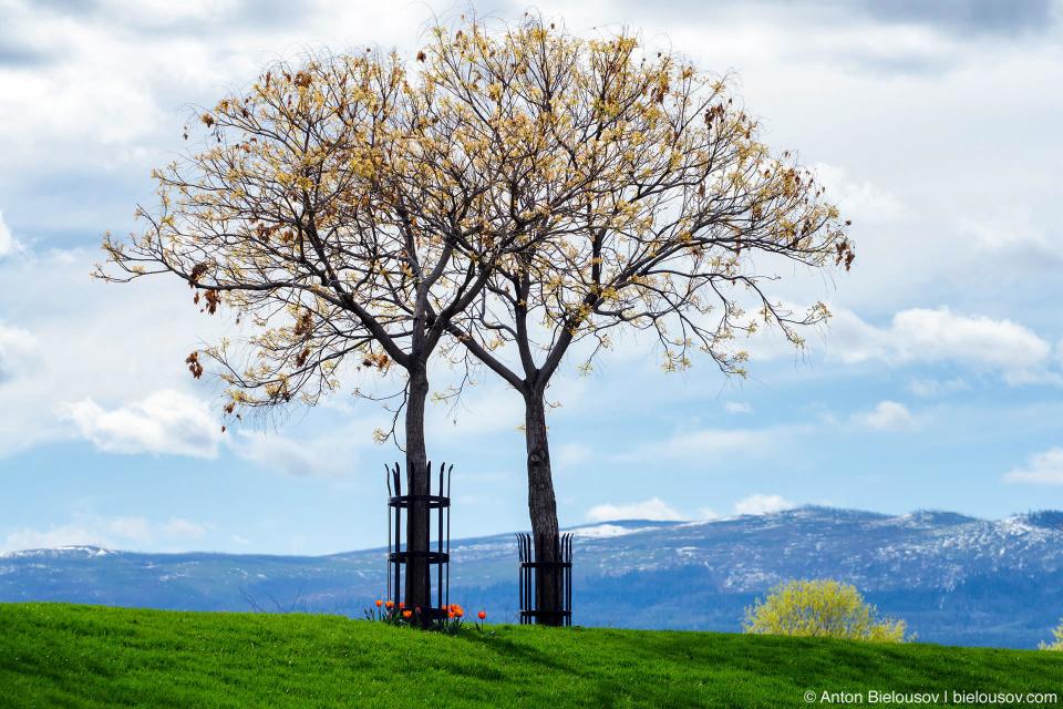 Kelowna waterfront spring trees