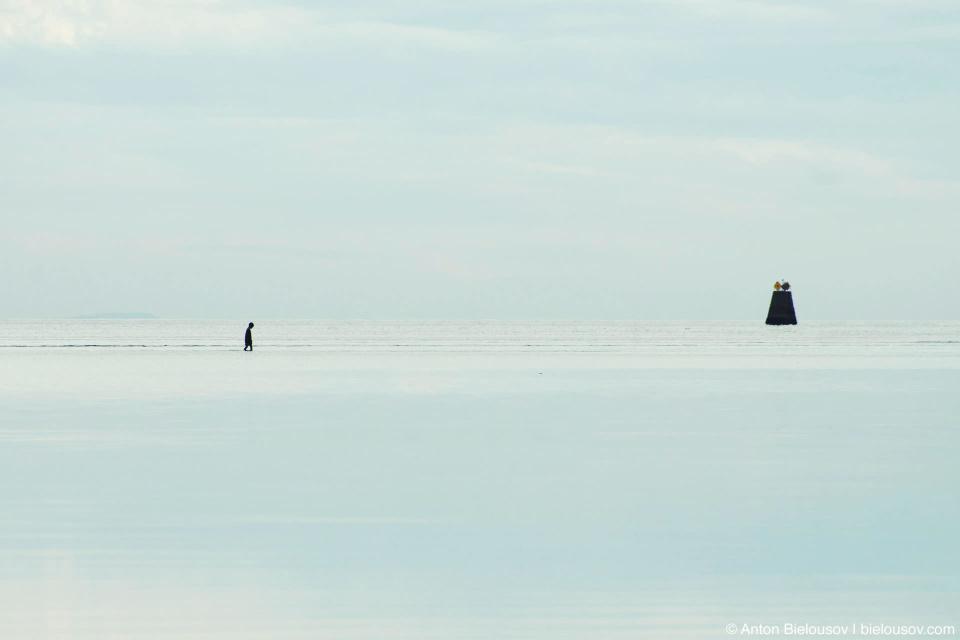 Отлив у пограничного буя на полуострове Тсаввассен