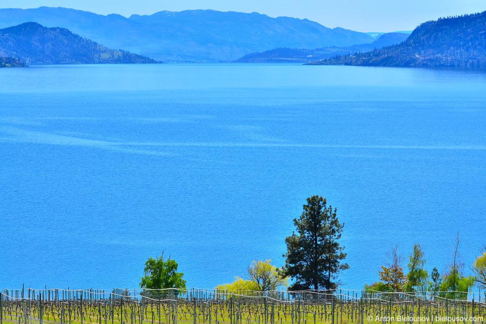 Картинки по запросу озеро Оканаган