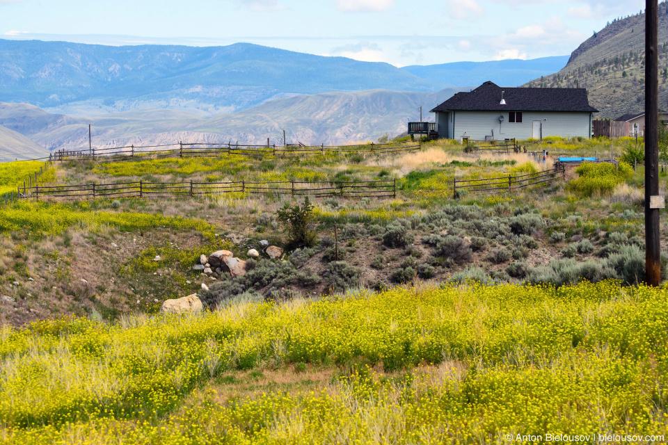 анчо — это та же ферма, где вместо того чтобы вспахивать поле, на него просто выпускают лошадей пастись.