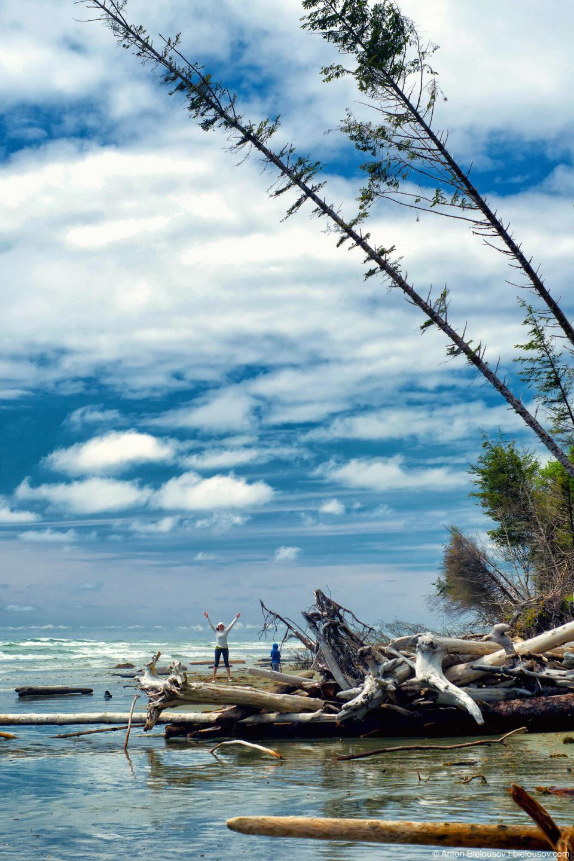 Заваленные деревья на пляже Combers Beach (Pacific Rim National Park)