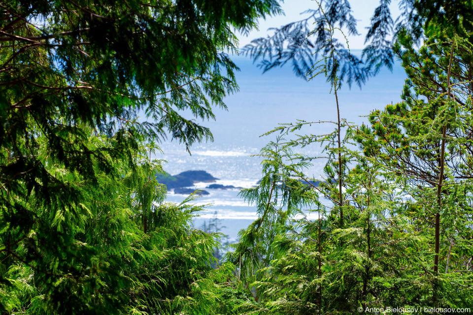 Pacific Rim National Park (Vancouver Island) © Anton Bielousov, 2013