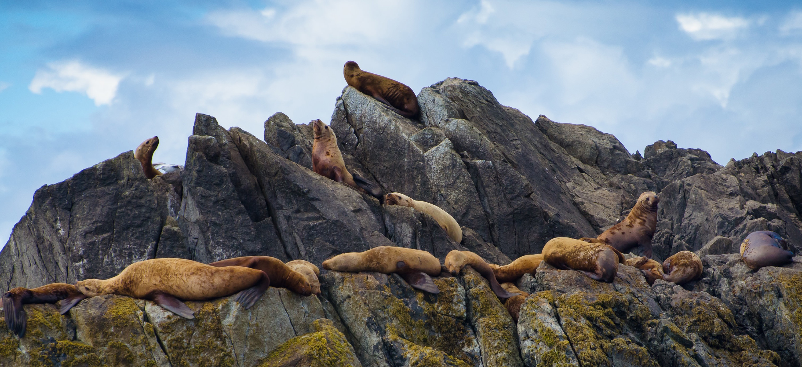 Sea lions on rocky island at Pacific Rim National Park (Vancouver Island)