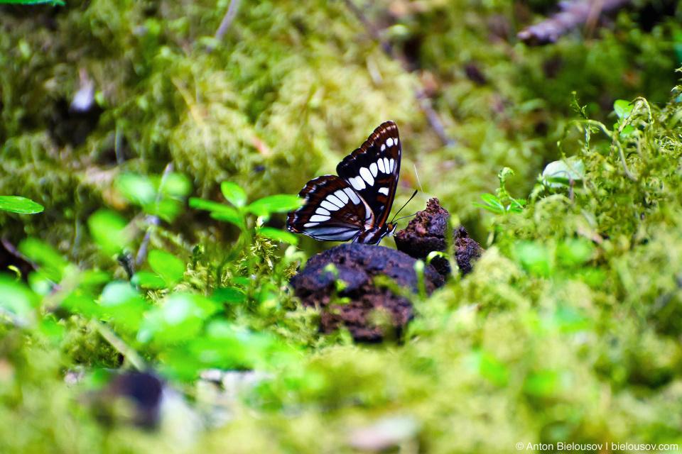 Говно и бабочки