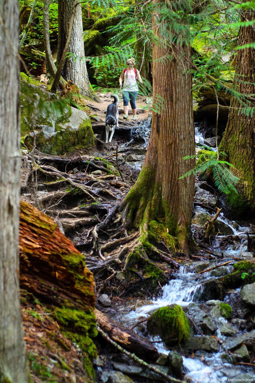 Dogs on Lindeman Lake Trail (Chilliwack, BC)