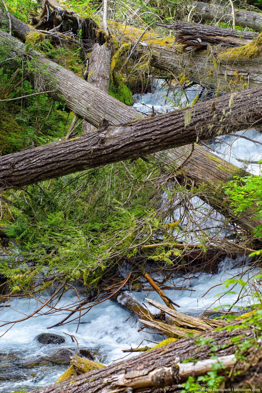 Lindeman Lake Creek (Chilliwack, BC)