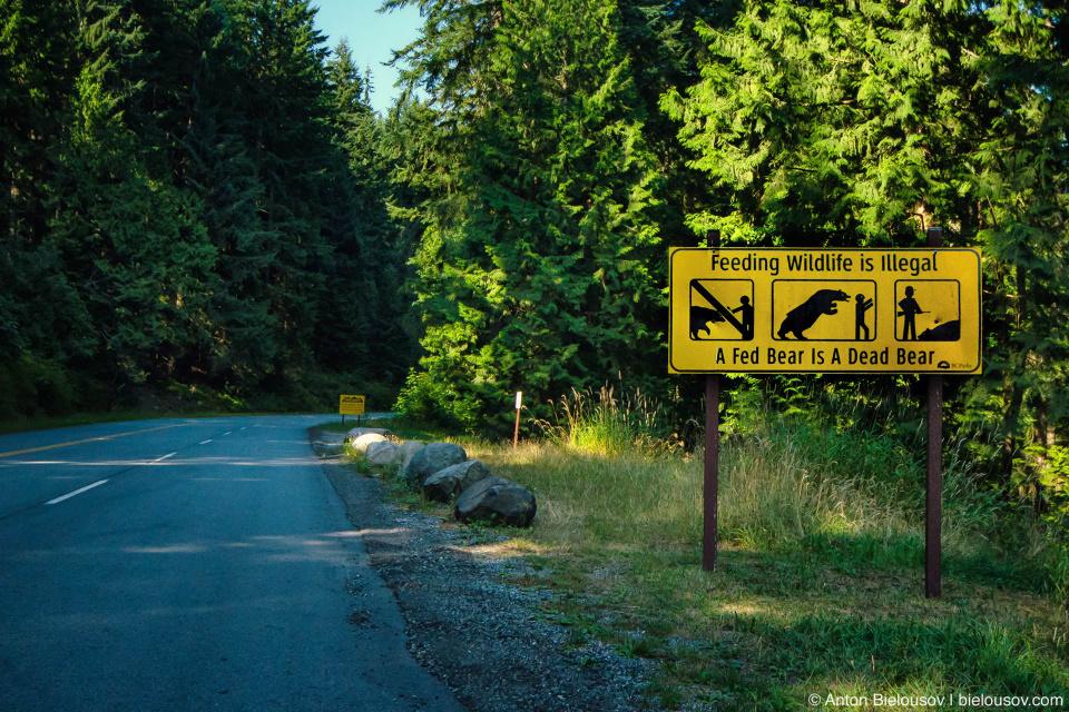 A Fed Bear Is A Dead Bear Sign (Seymour Mountain Rd.)