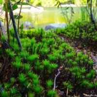 И растительность необычная, докембрийская какая-то.