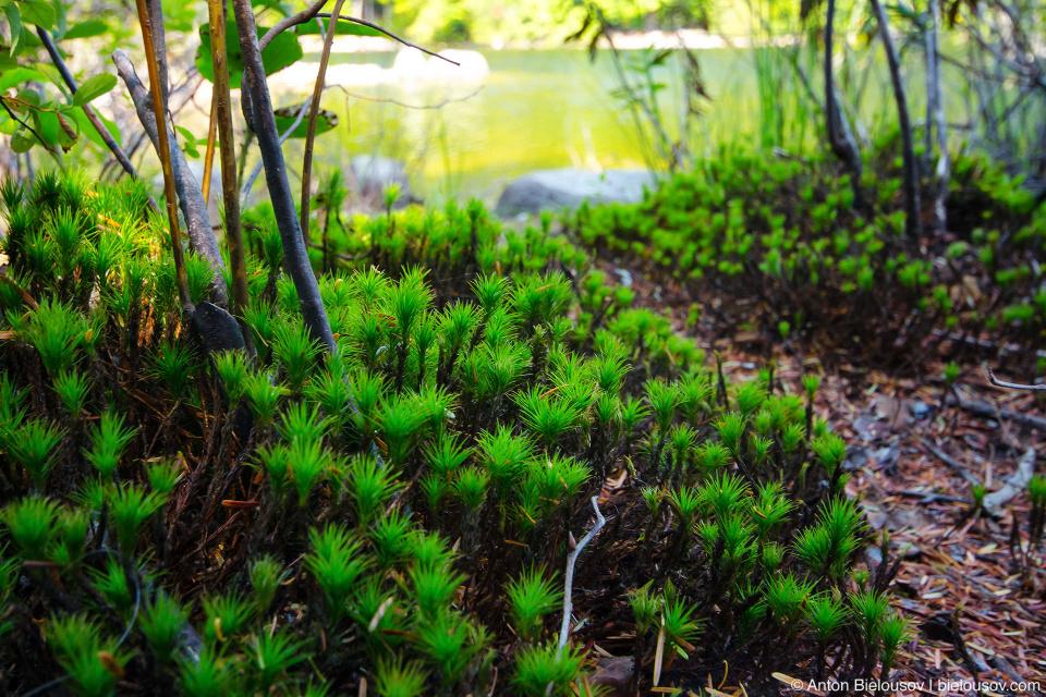 Растительность на берегу озера Rice Lake