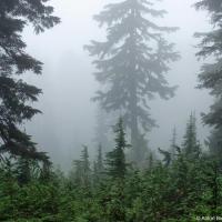 В облаках на горе Сеуймур