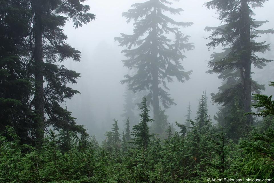 Fog on Seymour Mountain Trail