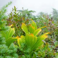 Растительность дождевого леса оживает только когда в нем по-настоящему влажно.