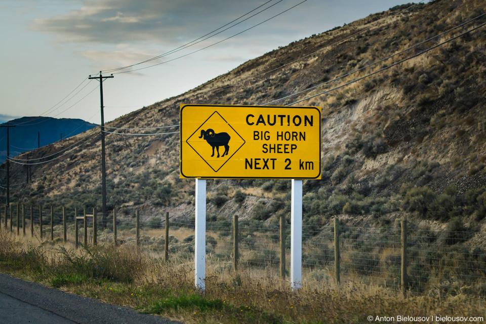 Caution! Big Horn Sheep next 2km sign