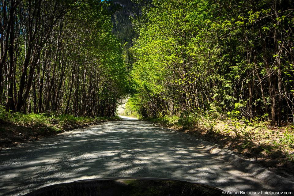 Lillooet Forestry Service Road — здесь так называют гравийные дороги, по которым из лесу вывозят дреесину на огромных грузовиках.