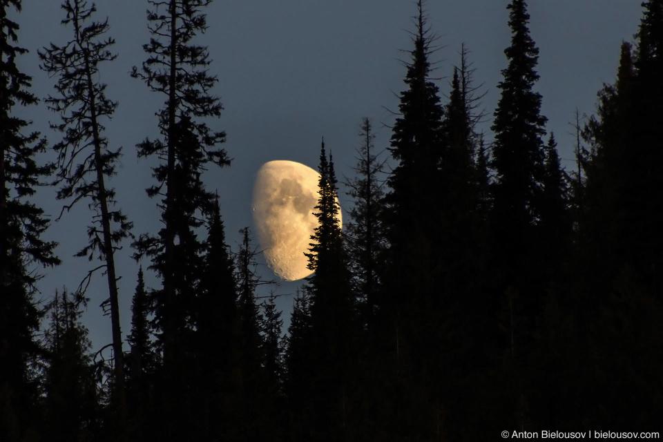 Moon in trees telephoto