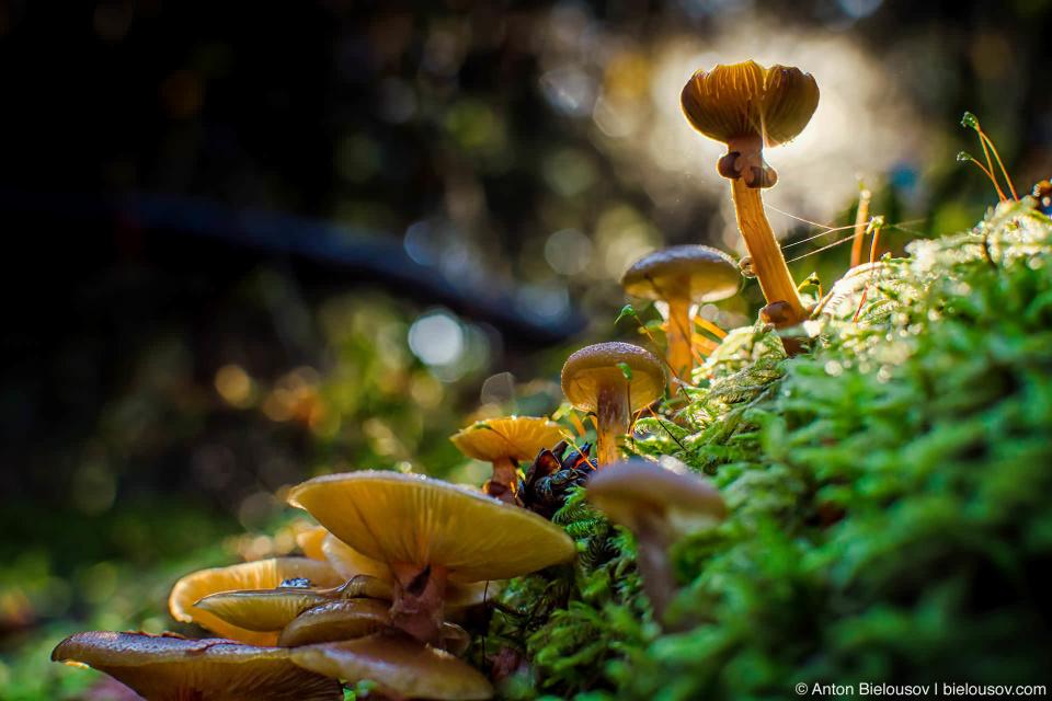 Еще вокруг озера — просто невероятное количество грибов.