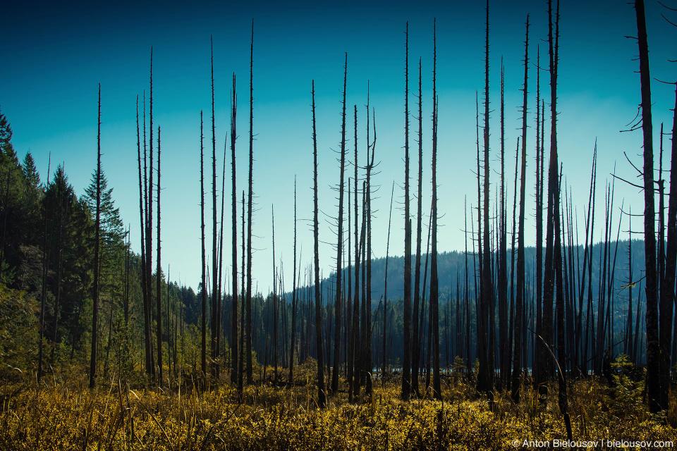 Ничего особенного в этом озере нет кроме, разве что, выжженого леса на дальнем его берегу.