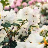 С первым Днем весны! В цивилизованном мире мы не захватываем территории соседних государств и считаем первым днем весны не первое число месяца а день весеннего равноденствия.
