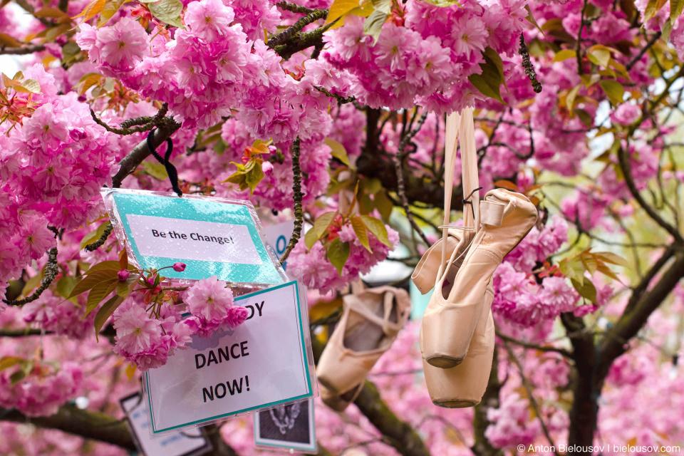 А то подумаете еще, что у нас кроме зонтов и не цветет ничего…  У нас и пуанты тоже цветут.