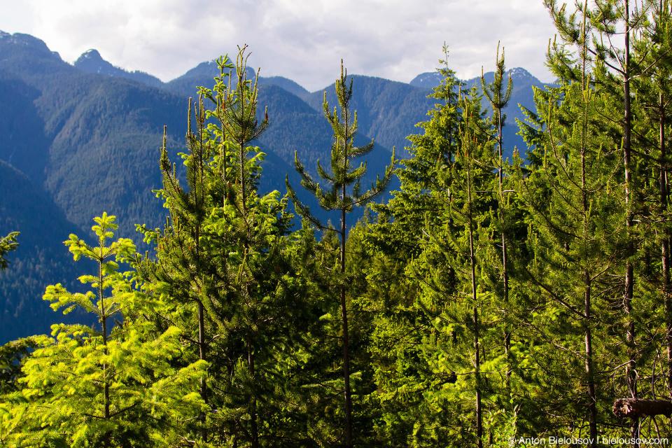 Вершины гор и верхушки деревьев на трейле Sendero Diez Vistas (Ванкувер)