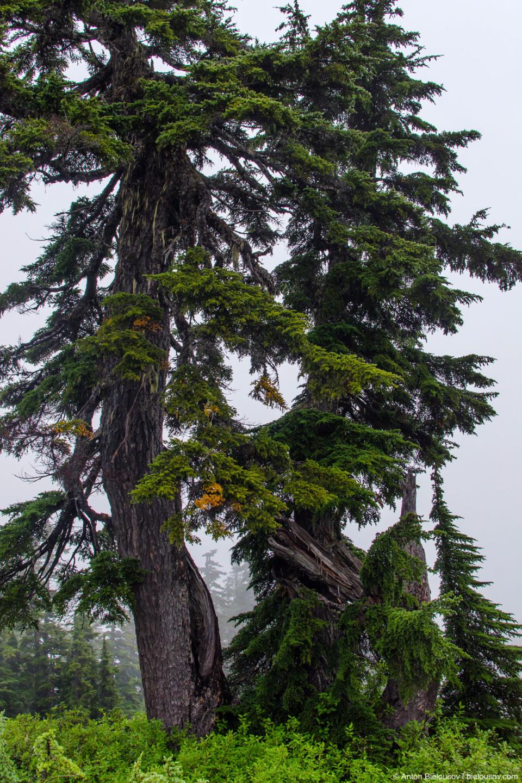 Лес на высоте 1500м