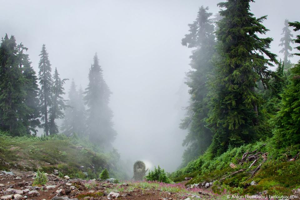 Ёжик в тумане на тропе Elfin Lakes
