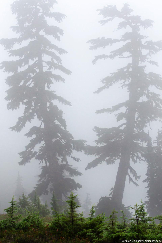 Лес в тумане на высоте 1500м