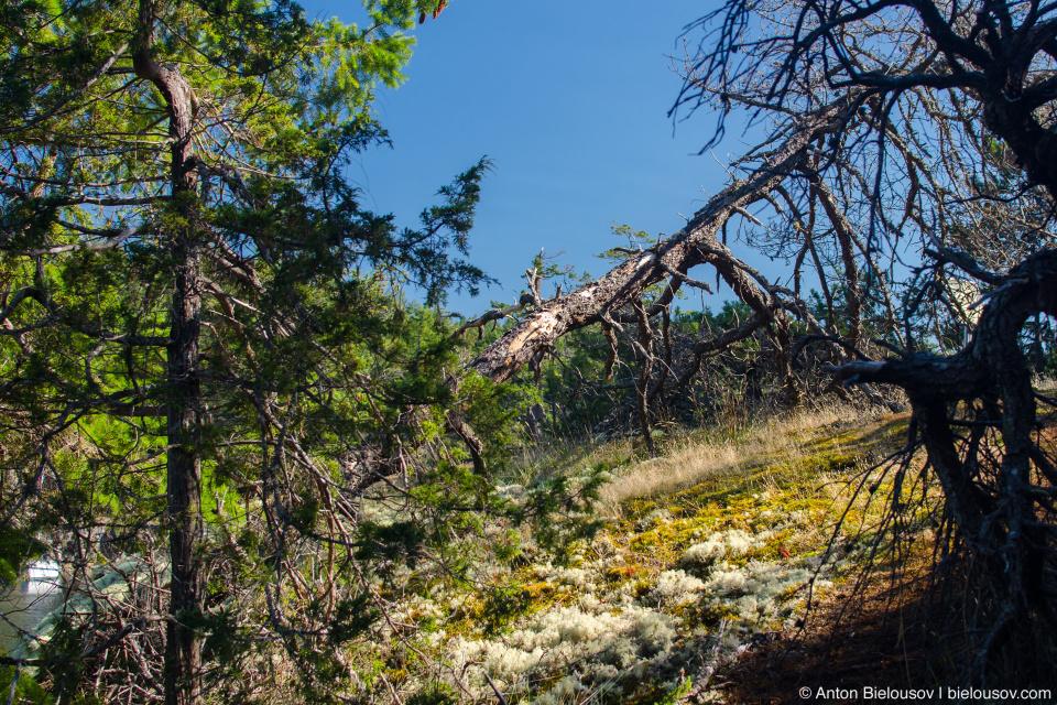 Smuglers Cove grove at Sunshine Coast, BC