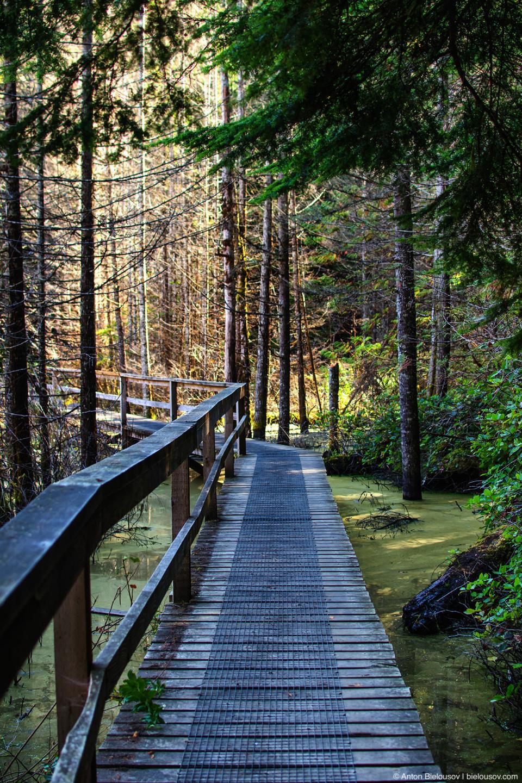 В Smugglers Cove ведет красивый трейл по мостикам через болото.