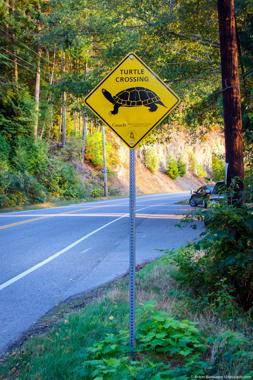 Sunshine Coast: Turtle Crossing sign