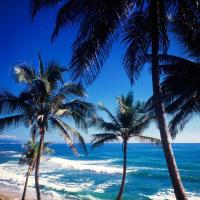 Доминиканская Республика – это тропический рай, заставляющий каждого гостя забыть о неурядицах, проблемах и скучной работе. Основной достопримечательностью Доминиканы можно с уверенностью считать побережье: прозрачная вода, бескрайние ухоженные пляжи, ряды кокосовых пальм, бары с прохладительными напитками и сувенирные лавки.  Прекрасно организованный пляжный отдых компенсирует нехватку музеев, театров, исторических достопримечательностей и прочих элементов культурного отдыха.