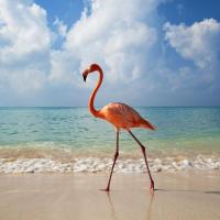 Если приема солнечных ванн и обдувания приятным бризом Вам всё же недостаточно, то можно отправиться в столицу Доминиканской Республики – Санто-Доминго. Там можно прогуляться по красивым паркам, посетить старинные дворцы и музеи, осмотреть форты и укрепления времен Колумба и просто углубиться в испанскую культуру Нового света.