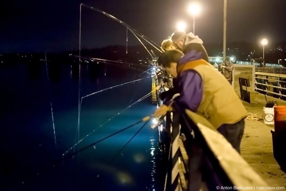 Ночная рыбалка на кальмаров в Эдмонде (Вашингтон)