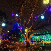 Van Dusen park Festival of Lights (2013)