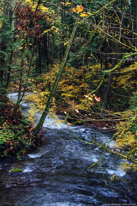 Whatcom Creek (Bellingham, WA)