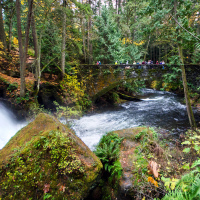 Whatcom Falls Park <br/><small>США: Bellingham, WA</small>